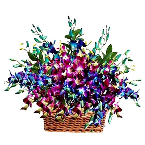 Basket of purple and blue orchids