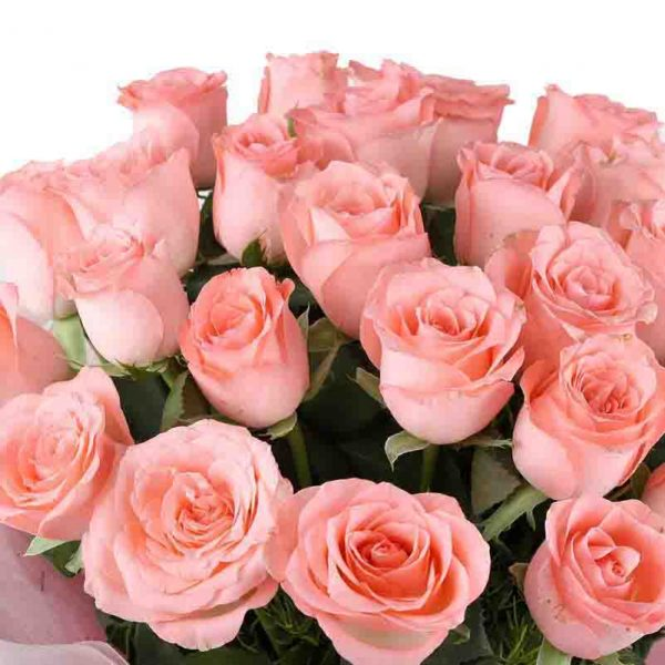 25 light pink roses with green leaves
