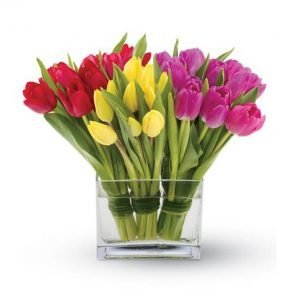 Colourful tulips in a square glass vase