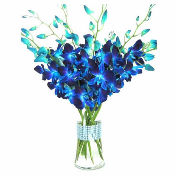 Blue orchids in a round glass vase
