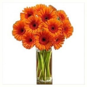 Orange gerberas and green leaves in a round glass vase